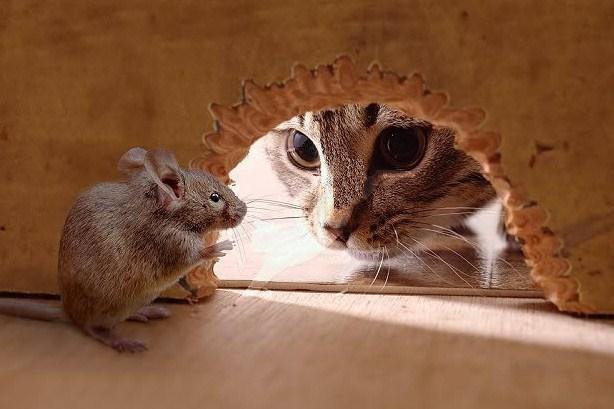 Cat__mouse